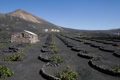 αμπελώνας Lanzarote Στοκ φωτογραφία με δικαίωμα ελεύθερης χρήσης