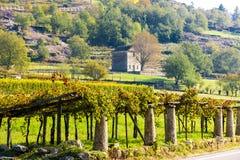 αμπελώνας, Valle d& x27 aosta, Ιταλία στοκ φωτογραφίες