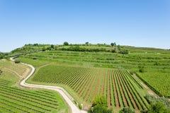 Αμπελώνες από Soave ιταλικό κρασί στοκ φωτογραφίες