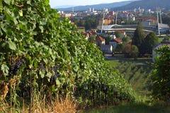Αμπελώνες και γήπεδο ποδοσφαίρου Maribor, Σλοβενία στοκ εικόνα