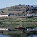 αμπελώνες κοιλάδων douro στοκ εικόνες