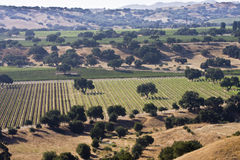 αμπελώνες κοιλάδων santa ynez στοκ εικόνα