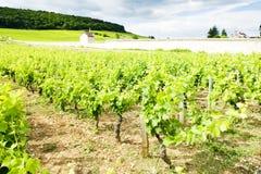 αμπελώνες κοντά σε gevrey-Chambertin, Cote de Nuits, Burgundy, φράγκο στοκ εικόνες