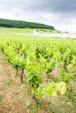 αμπελώνες κοντά σε gevrey-Chambertin, Cote de Nuits, Burgundy, φράγκο στοκ φωτογραφία με δικαίωμα ελεύθερης χρήσης