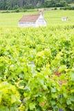αμπελώνες κοντά σε gevrey-Chambertin, Cote de Nuits, Burgundy, φράγκο στοκ φωτογραφία