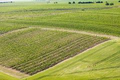 αμπελώνες κοντά σε Velke Bilovice, Δημοκρατία της Τσεχίας στοκ φωτογραφία με δικαίωμα ελεύθερης χρήσης