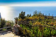 Αμπελώνες μεταξύ των λόφων κατά μήκος της ακτής της Αμάλφης στοκ φωτογραφία με δικαίωμα ελεύθερης χρήσης