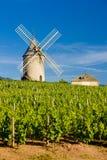 αμπελώνες με τον ανεμόμυλο κοντά σε Chénas, Beaujolais, Burgundy, φράγκο στοκ εικόνα