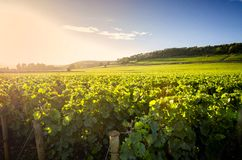 Αμπελώνες σε Savigny les Beaune, κοντά στο Beaune, Burgundy, Γαλλία στοκ φωτογραφία με δικαίωμα ελεύθερης χρήσης