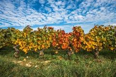 Αμπελώνες στην εποχή φθινοπώρου, Burgundy, Γαλλία στοκ φωτογραφία