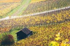Αμπελώνες το φθινόπωρο Στοκ Φωτογραφία