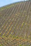 Αμπελώνες Oltrepo Pavese τον Απρίλιο στοκ φωτογραφία