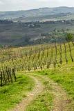Αμπελώνες Oltrepo Pavese τον Απρίλιο στοκ φωτογραφία με δικαίωμα ελεύθερης χρήσης