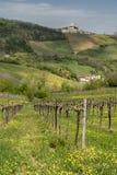 Αμπελώνες Oltrepo Pavese τον Απρίλιο στοκ εικόνες με δικαίωμα ελεύθερης χρήσης