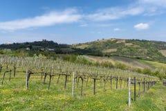 Αμπελώνες Oltrepo Pavese τον Απρίλιο στοκ εικόνες