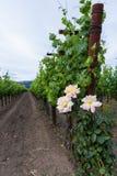 αμπελώνας με τα τριαντάφυλλα Στοκ φωτογραφία με δικαίωμα ελεύθερης χρήσης