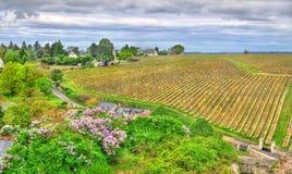 Αμπελώνας στην κοιλάδα Chinon - της Loire, Γαλλία Στοκ φωτογραφία με δικαίωμα ελεύθερης χρήσης