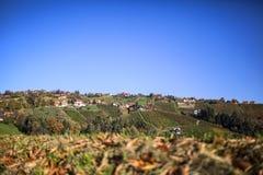 Αμπελώνας στη διαδρομή κρασιού Schilcher με μερικές παραδοσιακές παλαιές καλύβες Στοκ Εικόνες