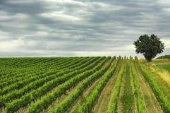 Αμπελώνας Gironde (Aquitaine) στοκ φωτογραφία με δικαίωμα ελεύθερης χρήσης