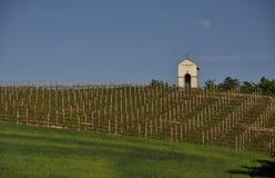 Αμπελώνας Piedmont στην Ιταλία Στοκ Φωτογραφία