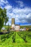 Αμπελώνας, Ruedelsheim, Hesse, Γερμανία Στοκ Εικόνες
