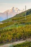 Αμπελώνες, Ελβετία στοκ εικόνες με δικαίωμα ελεύθερης χρήσης