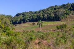 Αμπελώνες και αγροκτήματα το χειμώνα, κοιλάδα DOS Vinhedos κοιλάδων στοκ φωτογραφία