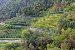 Αμπελώνες και φυτεία της Apple στο νότιο Τύρολο, Ιταλία Στοκ Φωτογραφία