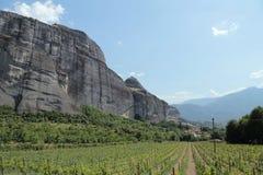 Αμπελώνες κρασιού Meteora, Thessaly, Ελλάδα Στοκ Εικόνες