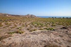 Αμπελώνες σε Santorini Στοκ Εικόνες