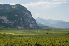 Αμπελώνες σε Trento στοκ εικόνες
