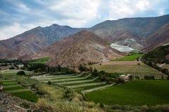 Αμπελώνες της κοιλάδας Elqui, μέρος των Άνδεων Atacama Στοκ Εικόνες