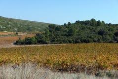 Αμπελώνες του Languedoc το φθινόπωρο Στοκ Φωτογραφία