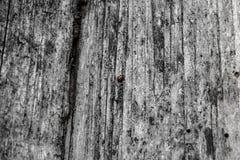 λαμπρίτσα Στοκ Φωτογραφία