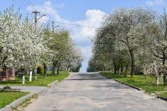 Αμυγδαλιές που ανθίζουν στον οπωρώνα ενάντια στο μπλε, ουρανός ανοίξεων Τα δέντρα είναι ανθίζοντας στοκ φωτογραφία
