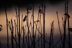 Αμυδρό ηλιοβασίλεμα Στοκ εικόνα με δικαίωμα ελεύθερης χρήσης