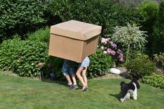 Αμφιθαλείς με το κουτί από χαρτόνι στοκ εικόνα με δικαίωμα ελεύθερης χρήσης