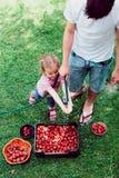 Αμφιθαλείς που πλένουν τις φράουλες Στοκ Εικόνες