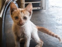 ΑΜ λίγη γάτα στοκ εικόνα με δικαίωμα ελεύθερης χρήσης
