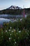 ΑΜ πιό βροχερή και Wildflowers στην ανατολή λιμνών αντανάκλασης Στοκ Φωτογραφία
