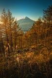 ΑΜ Φούτζι με τα δέντρα πεύκων φθινοπώρου στην ανατολή σε Fujikawaguchiko, J στοκ εικόνες
