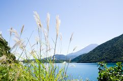 ΑΜ Φούτζι με την ιαπωνική Pampas χλόη το φθινόπωρο, Ιαπωνία στοκ εικόνες