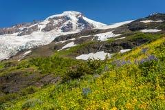 ΑΜ Όρος Baker Wildflowers Στοκ Εικόνα