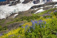 ΑΜ Όρος Baker Wildflowers Στοκ φωτογραφία με δικαίωμα ελεύθερης χρήσης