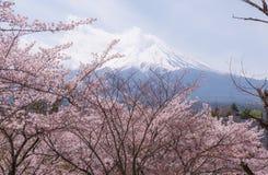ΑΜ fuji με το άνθος κερασιών και κίτρινη χλόη σε μια νεφελώδη ημέρα Ένα τοπίο στην Ιαπωνία με το αξιοπρόσεκτο βουνό του Στοκ Φωτογραφία