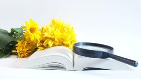 Ανάγνωση βιβλίων Στοκ φωτογραφίες με δικαίωμα ελεύθερης χρήσης