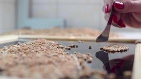 Ανάλυση της ποιότητας σιταριού κίνηση αργή απόθεμα βίντεο