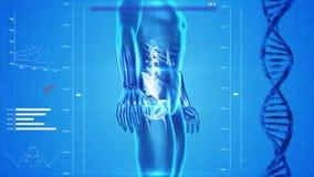 Ανάλυση του ανθρώπινου σώματος διανυσματική απεικόνιση