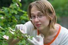 ανάλυση του νέου φυτού στοκ εικόνα με δικαίωμα ελεύθερης χρήσης