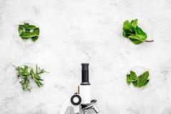 Ανάλυση τροφίμων Ελεύθερα λαχανικά φυτοφαρμάκων Δεντρολίβανο χορταριών, μέντα κοντά στο μικροσκόπιο στο γκρίζο διάστημα αντιγράφω στοκ εικόνα με δικαίωμα ελεύθερης χρήσης